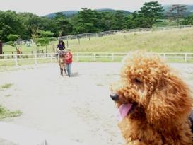 俺と馬とねーちゃん