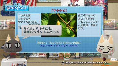 torosute2009/1/13 マタタビ 3