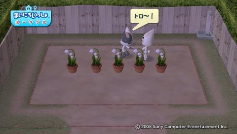 torosute2009/4/25 今日のお庭