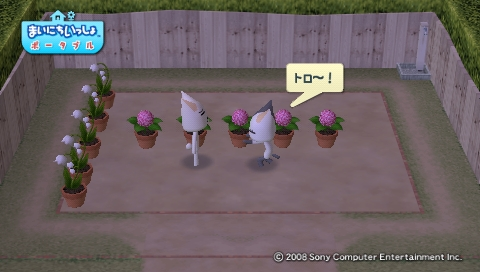 torosute2009/4/27 今日のお庭