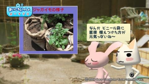 torosute2009/5/30 近場de摘み草 4
