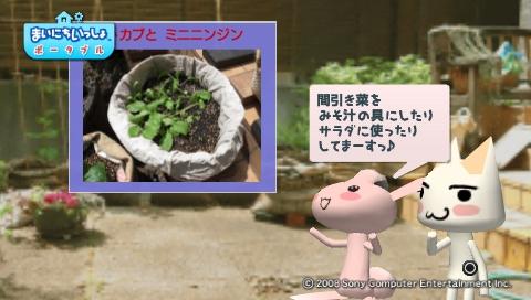 torosute2009/5/30 近場de摘み草 5