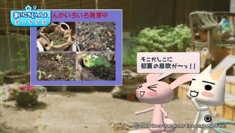 torosute2009/5/30 近場de摘み草 10