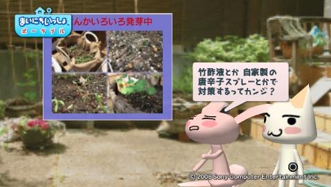 torosute2009/5/30 近場de摘み草 11