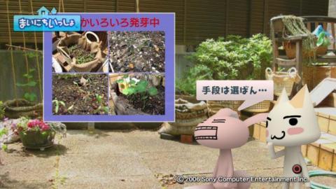 torosute2009/5/30 近場de摘み草 13