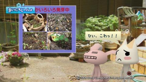 torosute2009/5/30 近場de摘み草 15