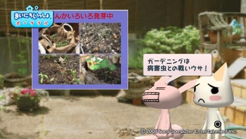 torosute2009/5/30 近場de摘み草 16