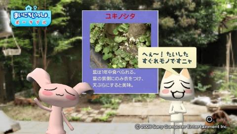 torosute2009/5/30 近場de摘み草 21