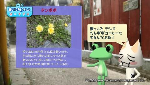 torosute2009/5/30 近場de摘み草 24