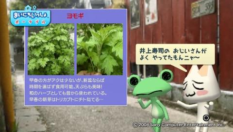 torosute2009/5/30 近場de摘み草 27