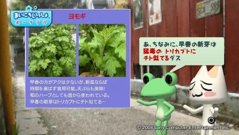 torosute2009/5/30 近場de摘み草 28