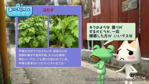 torosute2009/5/30 近場de摘み草 29