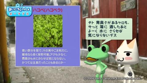 torosute2009/5/30 近場de摘み草 31