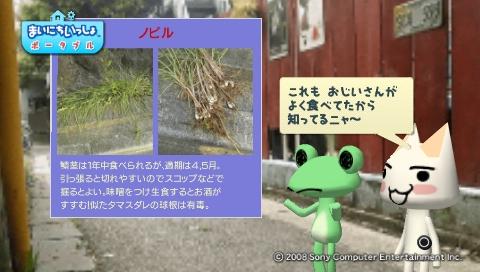 torosute2009/5/30 近場de摘み草 32
