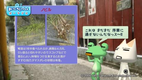 torosute2009/5/30 近場de摘み草 35