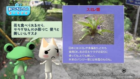 torosute2009/5/30 近場de摘み草 36