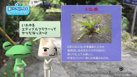 torosute2009/5/30 近場de摘み草 37
