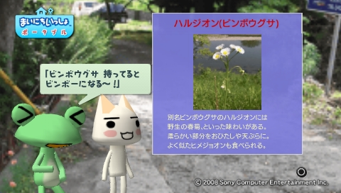 torosute2009/5/30 近場de摘み草 38