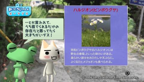 torosute2009/5/30 近場de摘み草 39