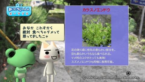 torosute2009/5/30 近場de摘み草 41