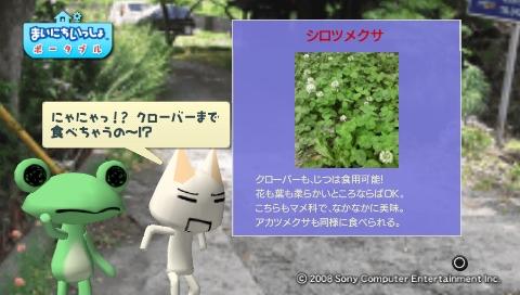 torosute2009/5/30 近場de摘み草 42