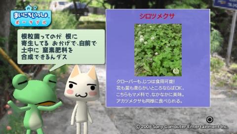 torosute2009/5/30 近場de摘み草 46