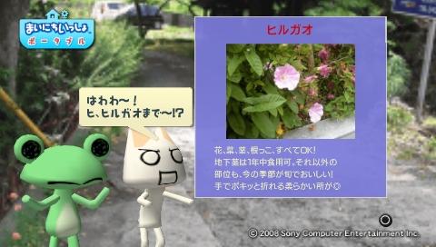torosute2009/5/30 近場de摘み草 47