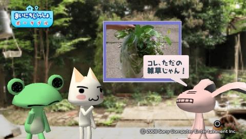 torosute2009/5/30 近場de摘み草 51