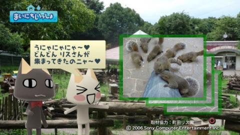 torosute2009/9/9 リス 12