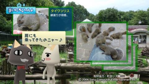 torosute2009/9/9 リス 13