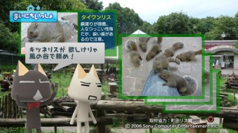 torosute2009/9/9 リス 17