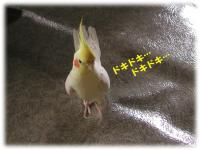 チキンハート-2-