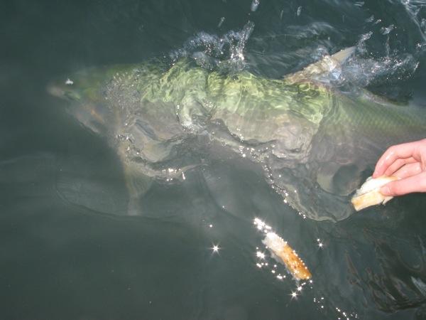 0704アクアシーン魚