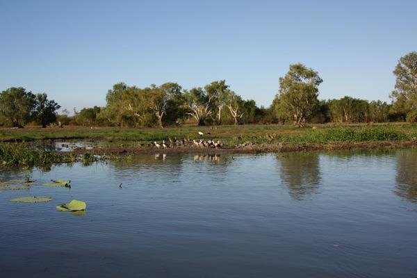 0705マリー川鳥