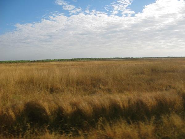 0706カカドゥー枯草原