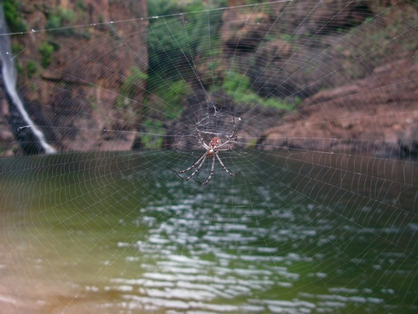 0707TwinFallsGorge蜘蛛