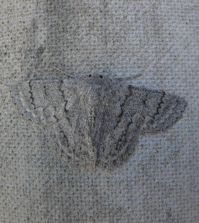 Fence,,,moth.jpg