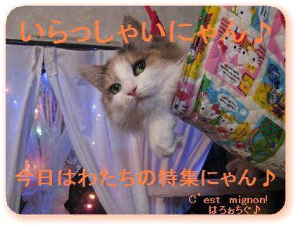 2-IMG_0527いらっしゃいませ