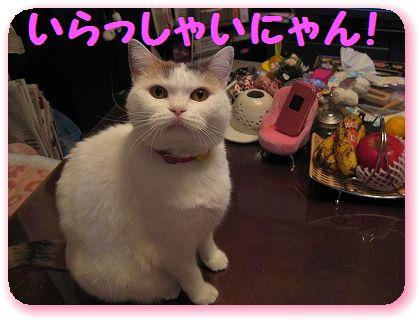 2-IMG_0929いらっしゃい