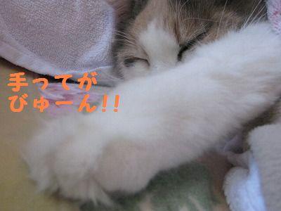 2-IMG_1721ぶネムネム