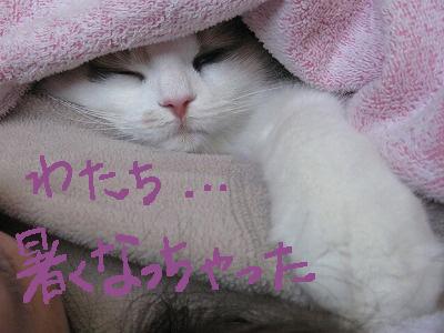 2-IMG_1871ぶネムネム