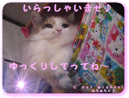 2-IMG_0903ぶ3643いらっしゃい