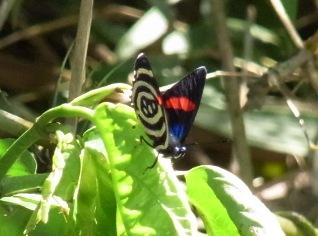borboleta2.jpg