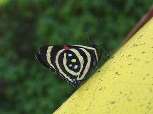 borboleta3.jpg