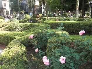 rosa3.jpg