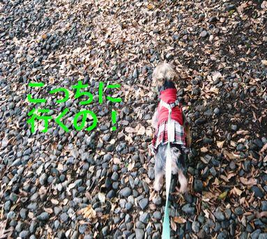 歩夢と散歩6