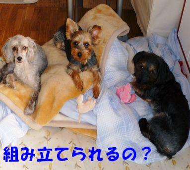 あゆちゃんのベッド4