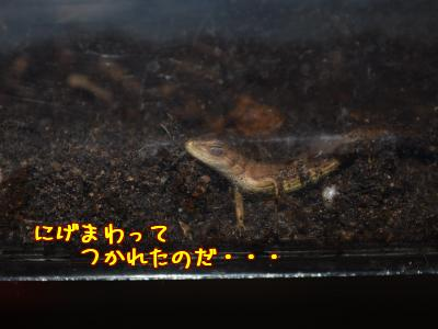 s3xqdJTV.jpg