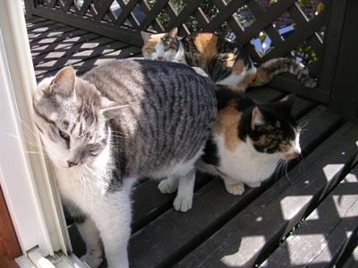 090,2183匹の猫 002