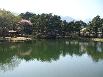 090409飯島、馬見塚公園、花瓶の水仙 018